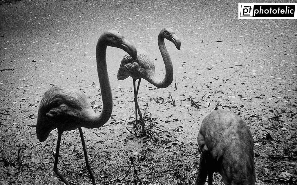 Flamingo Sculpture captured in Thieles Garten in Bremerhaven